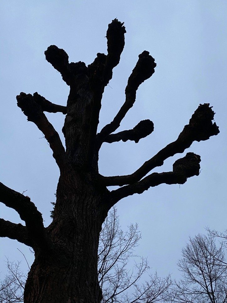 Gruselbaum