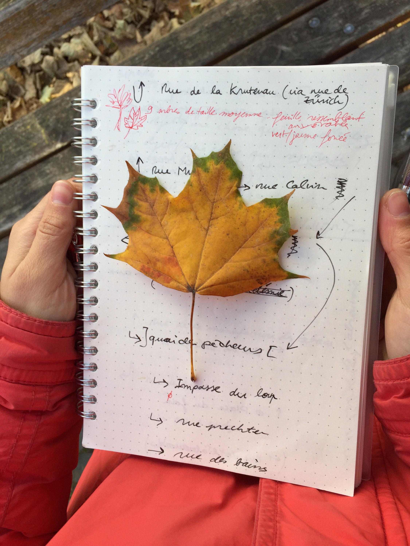 Rues et Feuilles de la Krutenau 12